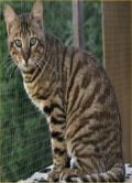 The Toyger
