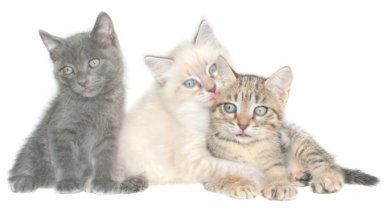 complete list of cat breeds