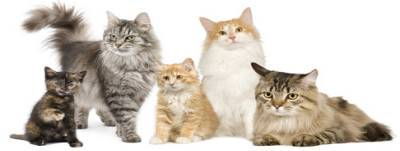 All The Different Cat Breeds With Pictures Your Essential Guide