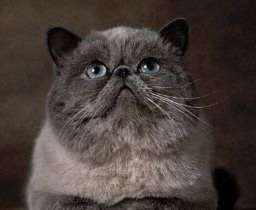 The Exotic 