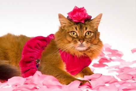 femalecat