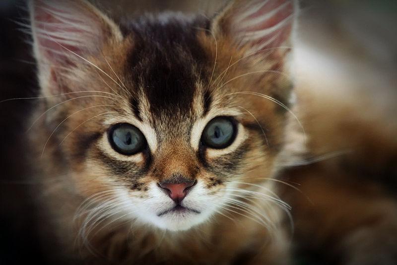 low phosphorus wet cat food chart