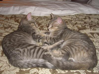 Gracie and Tess (1)