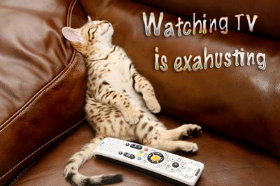 Savannah kittens finds watching TV exhausting!