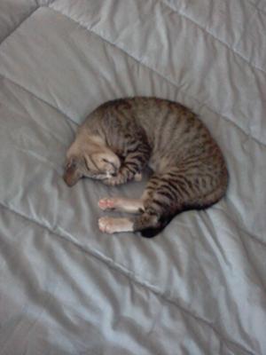 Slumbering sleep!