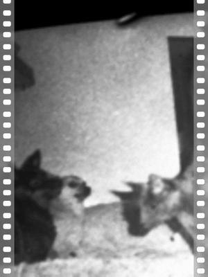 70's pets (2 dogs & Charka) (neg)
